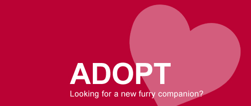 Adopt: Looking for a new furry companion? adopt a cat or dog in delta county