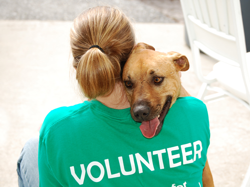 Volunteer Animal Shelter Escanaba Michigan